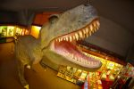 Photo of Percy T Rex at the Dinosaur Museum