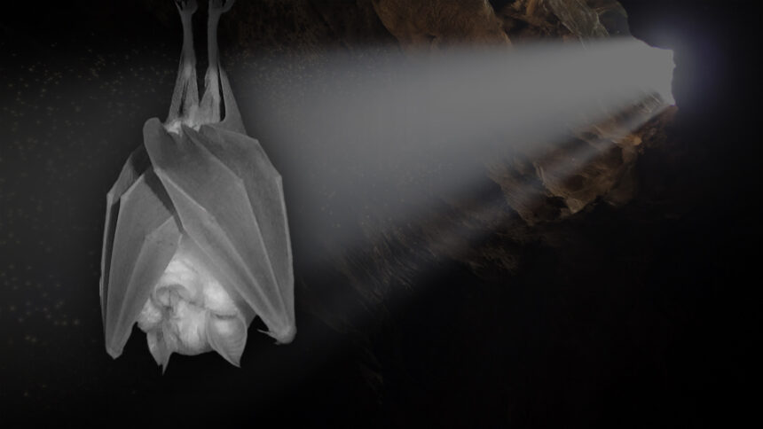An image from the BBC's 'Inside the Bat Cave' documentary